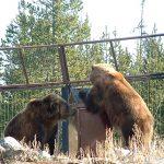 bear-proof trash receptacles
