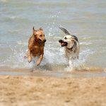 best dog parks