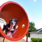 dog park equipment crawl