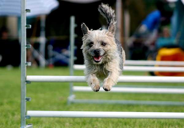 dog park equipment jumping