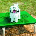 dog playground equipment