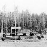 picnic tables bears