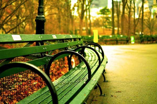 memorial park bench